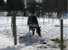 Зимнее содержание лошадей_1