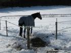 Зимнее содержание лошадей