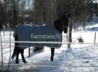 Зимнее содержание лошадей_4